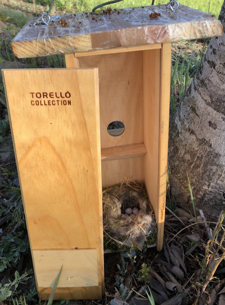 Un nido de carbonero común dentro de la caja de Torelló